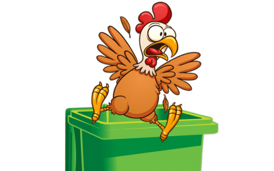 The chicken and the wheelie bin